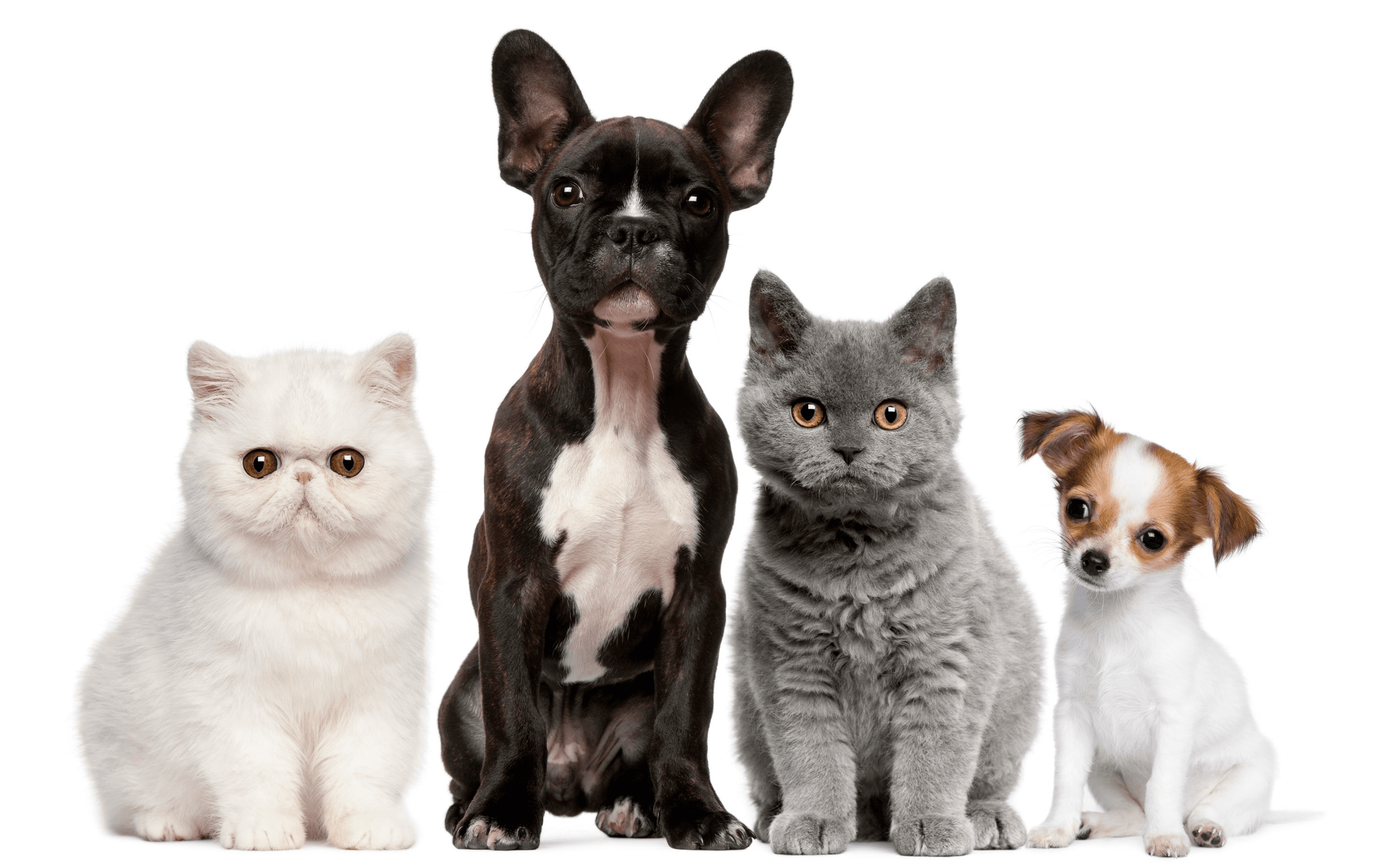 photo of cats and dogs